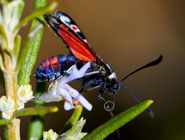 Bright Colored Insect3.jpg